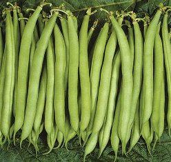 French Beans ஃபிரஞ்சு பீன்ஸ்